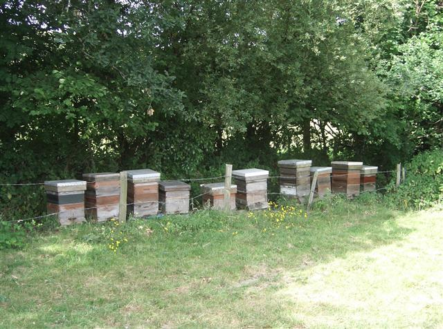 One field contained many beehives.